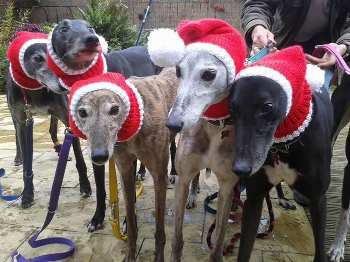abandoned-greyhounds-christmas-sweaters-knitted-with-love-jan-brown-2