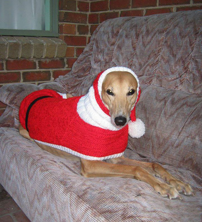abandoned-greyhounds-christmas-sweaters-knitted-with-love-jan-brown-5