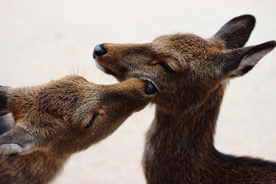 cute-animals-kissing-valentines-day-50__880