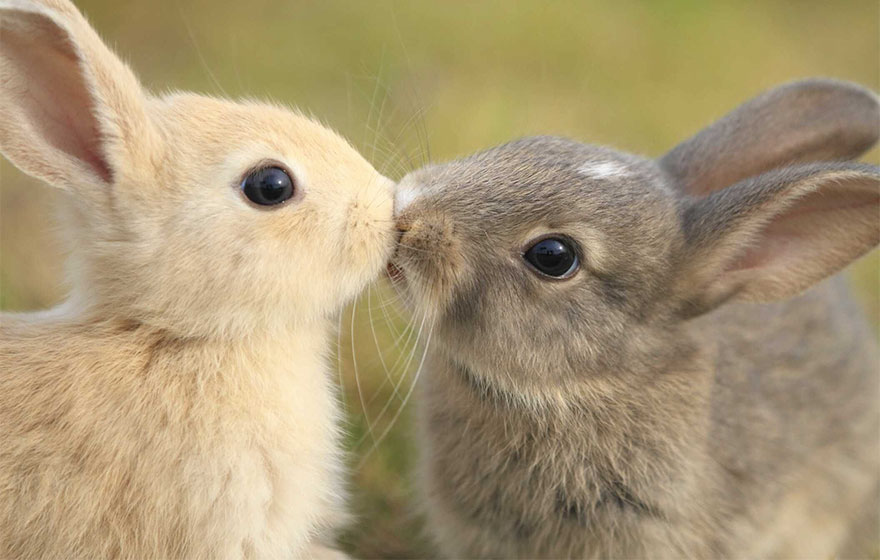 cute-animals-kissing-valentines-day-60__880