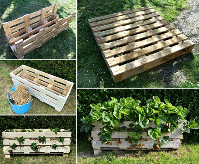 Strawberry-Planter-from-a-single-Pallet-f