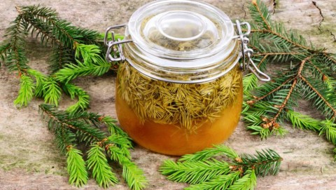 Spruce tip honey (Household remedy for coughs and colds)