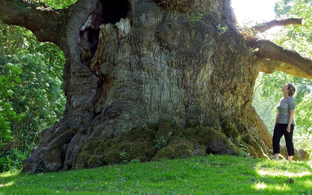 widest-tree_1913241a