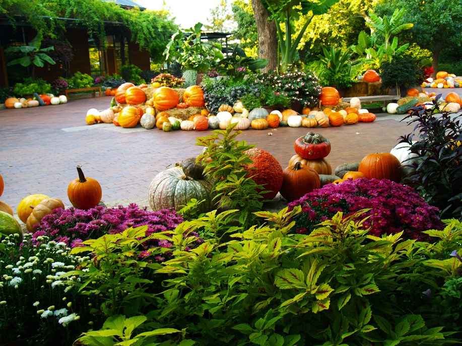 w-Pumpkins-Gourds-and-Squash-Along-the-Brick-Road