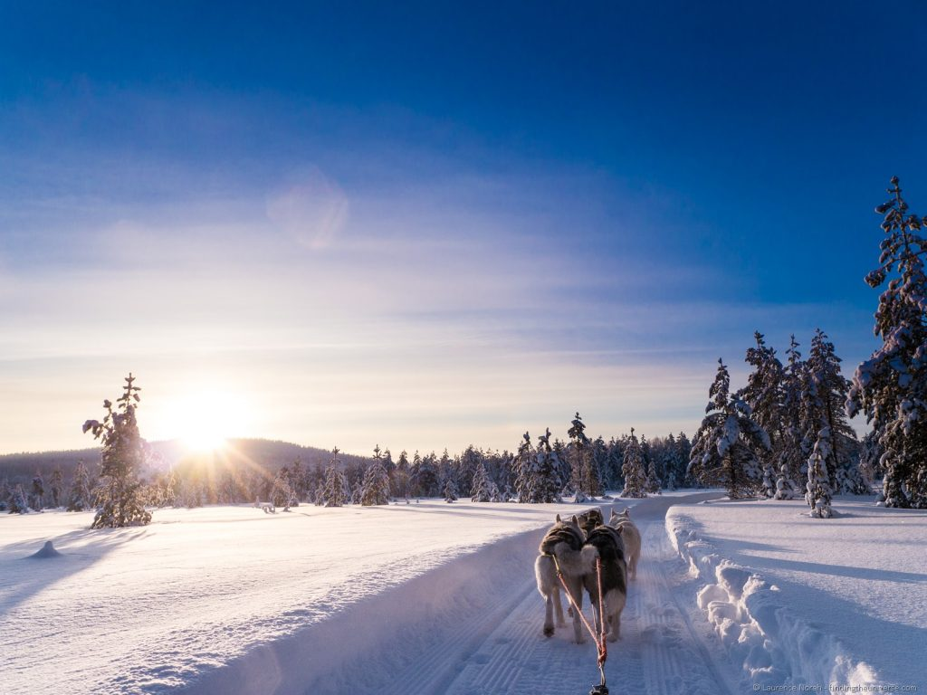 husky-sledding-iso-syote-finland-laplapd3