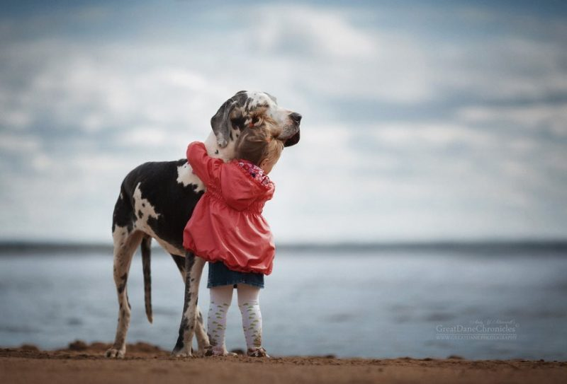 little-kids-big-dogs-photography-andy-seliverstoff-14-584fa917f1bf0__880