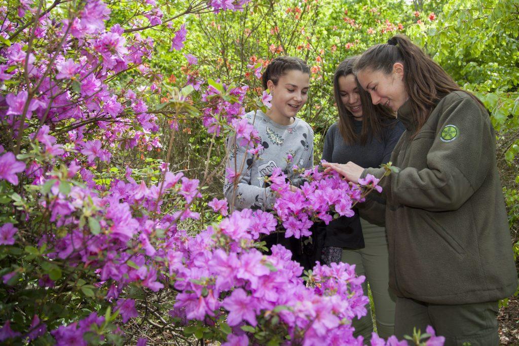 Kiscsehi, 2017. május 9. Gaál Krisztina erdész (j) egy virágzó rododendront mutat diákoknak a Budafapusztai Arborétumban 2017. május 9-én.  MTI Fotó: Varga György