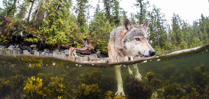 tengeri farkasok szczecin - válasszon kirakós játékot a megoldanihoz