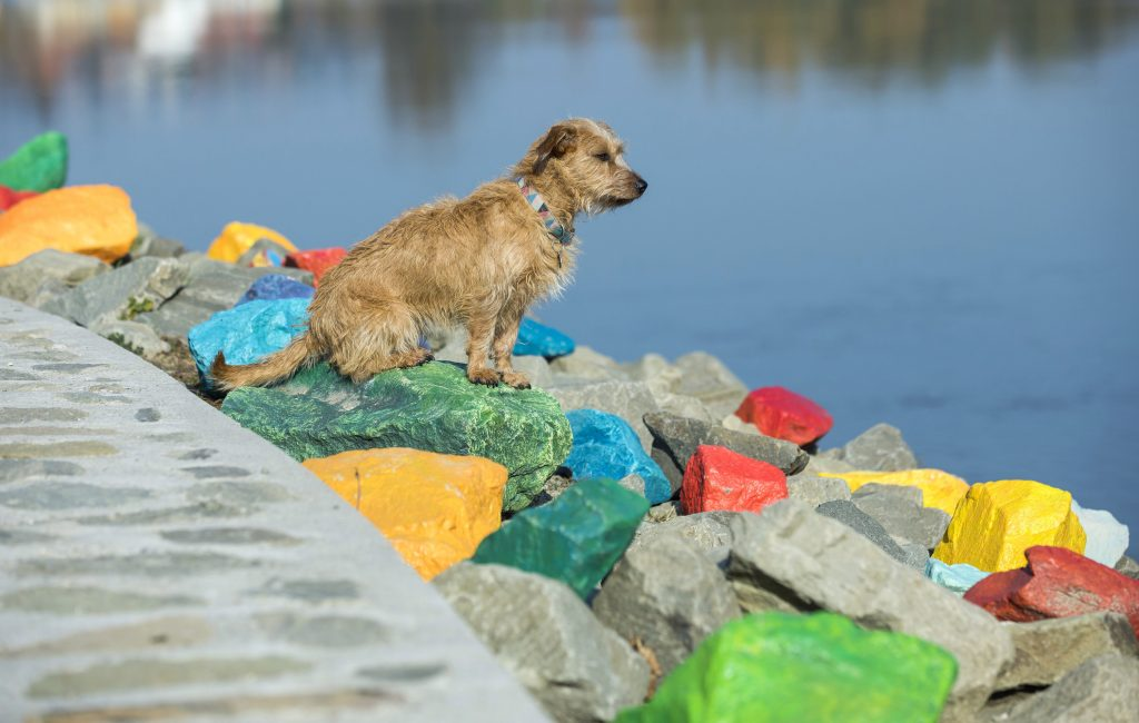 Szentendre, 2017. november 7. Színes köveken ül egy kutya a szentendrei Duna-korzón 2017. november 7-én. Ficzere Kyru (Krisztina) installációja az Üzenj a mosolyoddal! címû pályázatra készült, amelyet a közösségi interakciókra épülõ, kötetlen mûfajú, de Szentendrére utaló és fényképek készítésére, megosztására ösztönzõ alkotásokra írt ki a város. MTI Fotó: Mohai Balázs